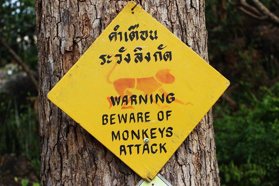 Apen Petchaburi gevaarlijk