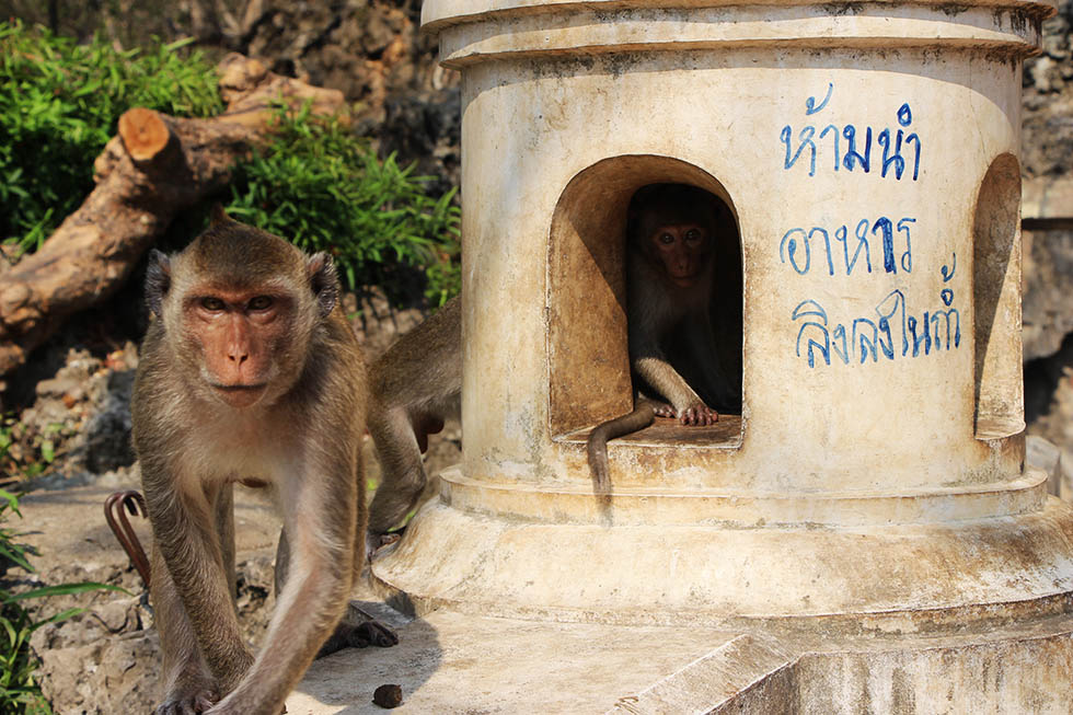 Khao Luang Cave Monkeys