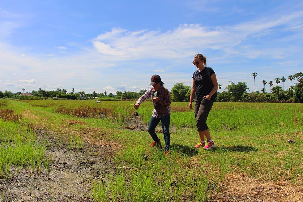 Rijstvelden in Chiang Mai