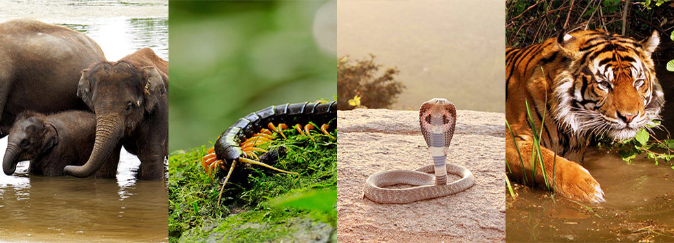 De gevaarlijkste dieren van Thailand