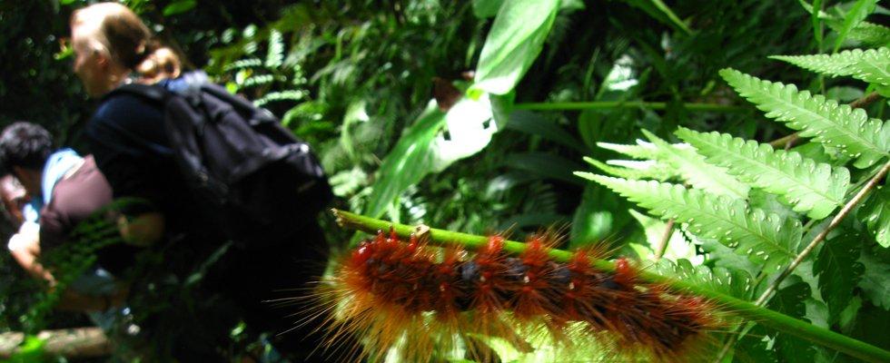 Insecten Thailand - Khap Yai Nationaal Park