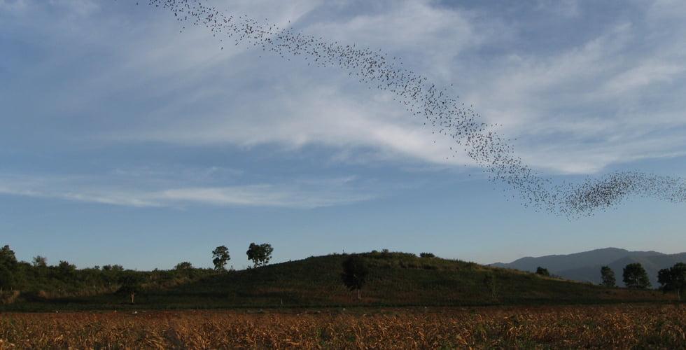 Vleermuizen Khao Yai Nationaal Park