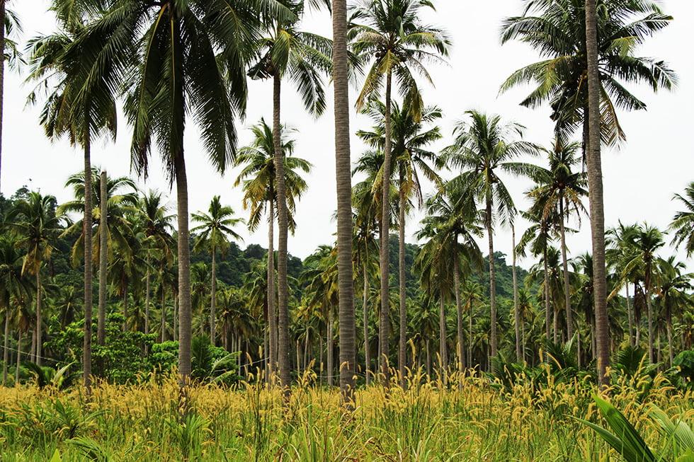 palmbomen-koh-ngai-paradise-resort