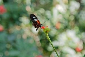 Gratis dingen doen in Bangkok - Butterfly Garden - Foto: jypsygen
