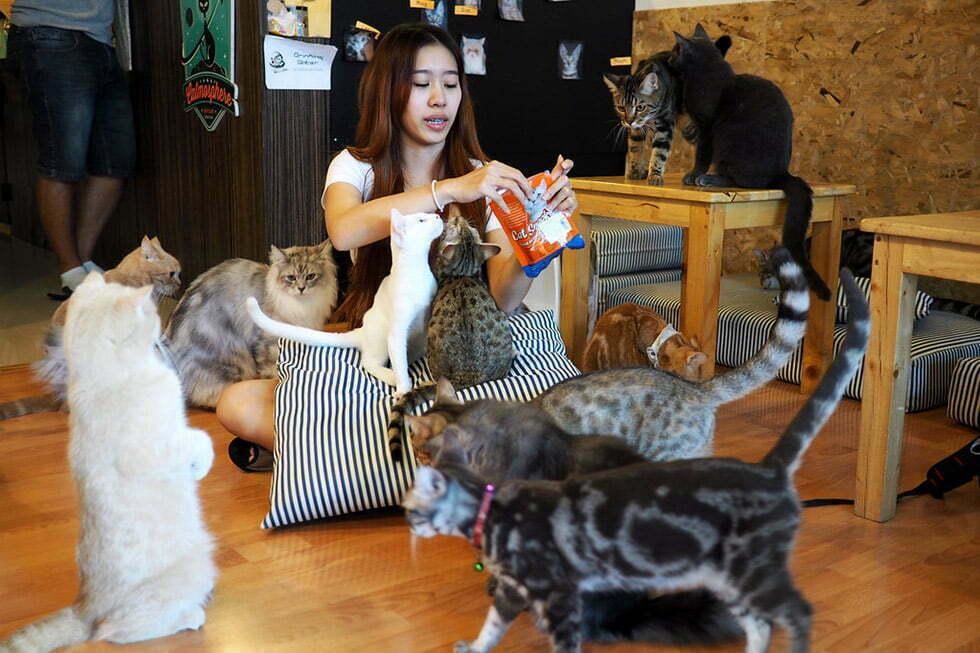 Wat te doen Chiang mai Tips