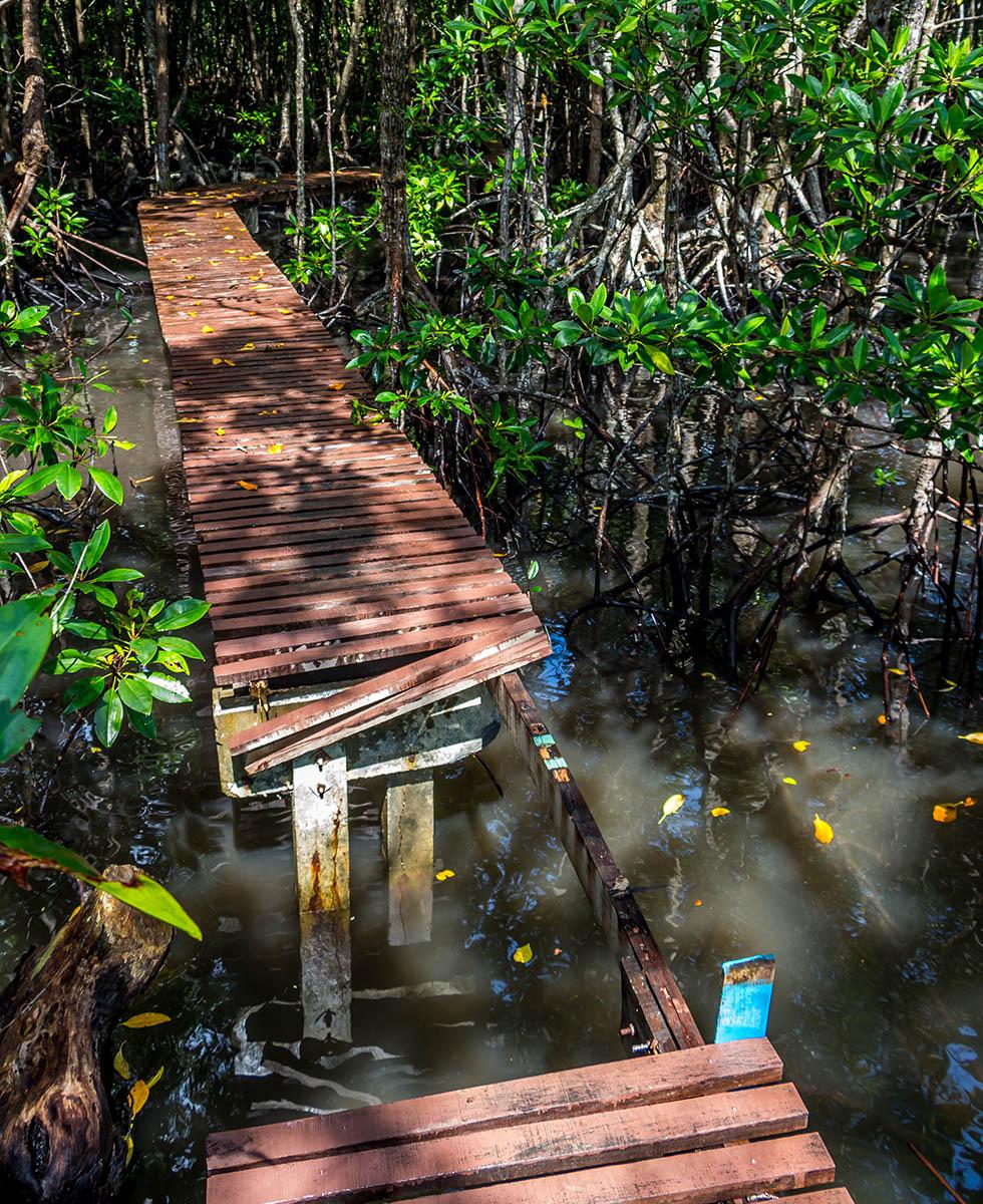 Gevaarlijk pad mangrove bos Koh Tan