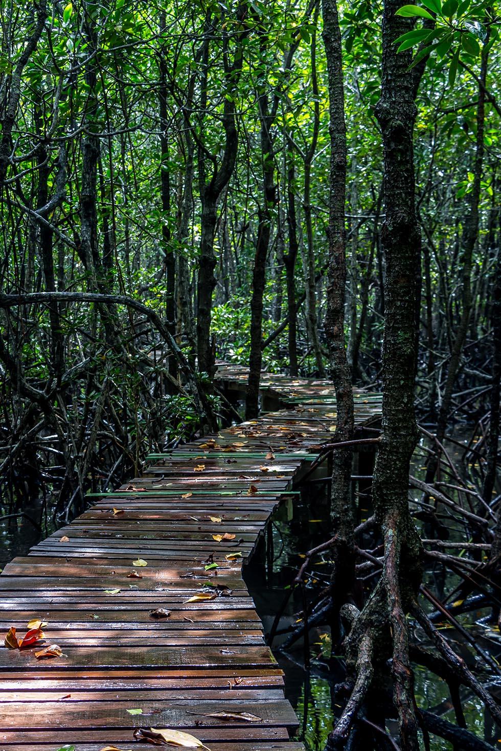 Mangrove bos Koh Tan