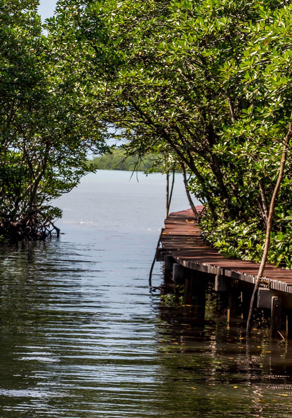 Mangrove pad Koh Tan