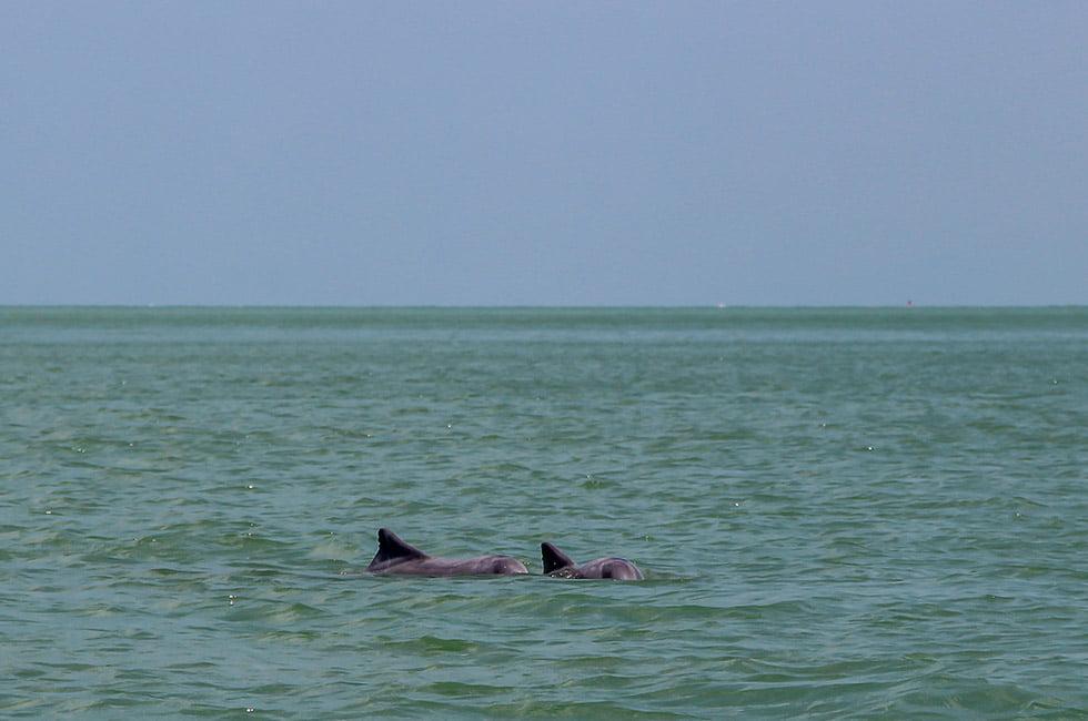 Dolfijnen Ao Khanom Twee