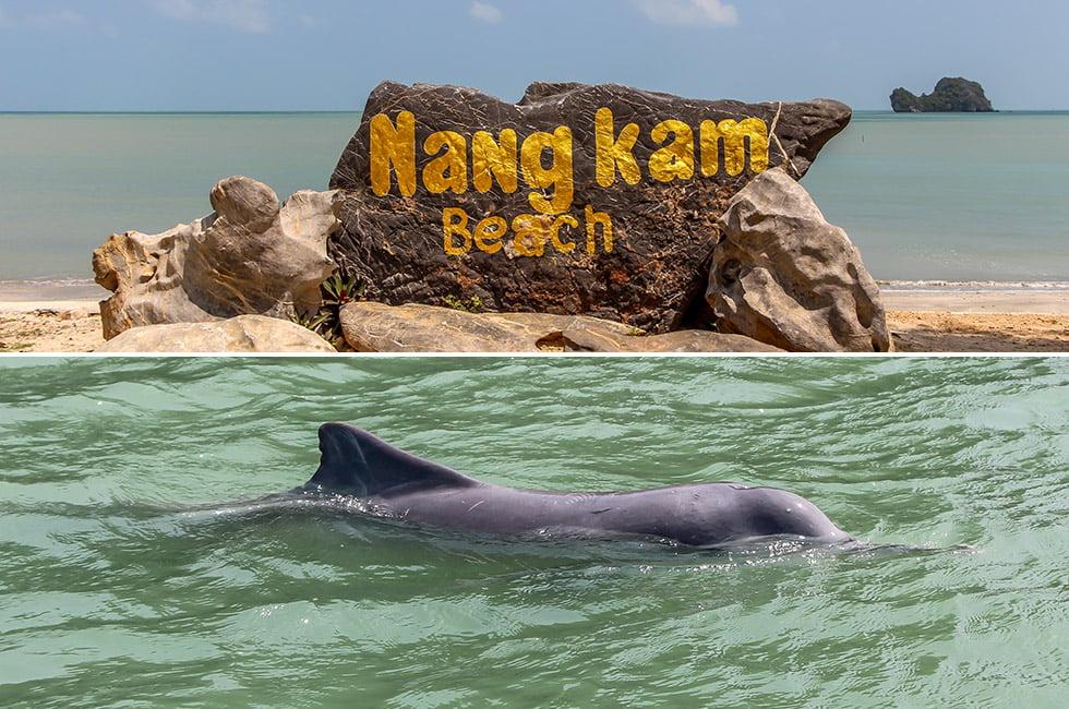 Nang Kam Beach en Dolfijn