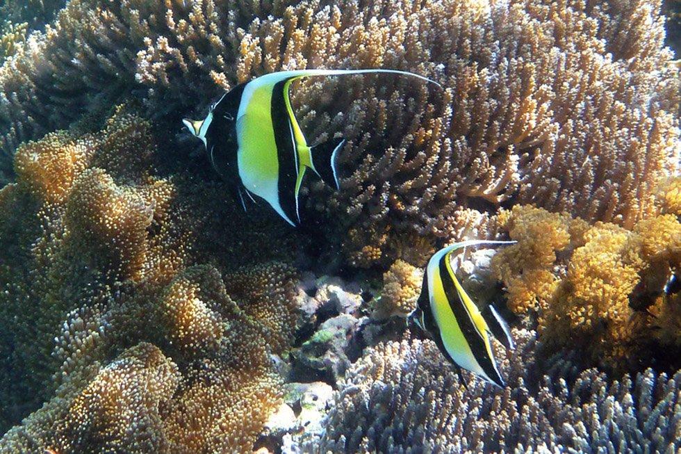 Snorkelen in Thailand. Foto: Zuki