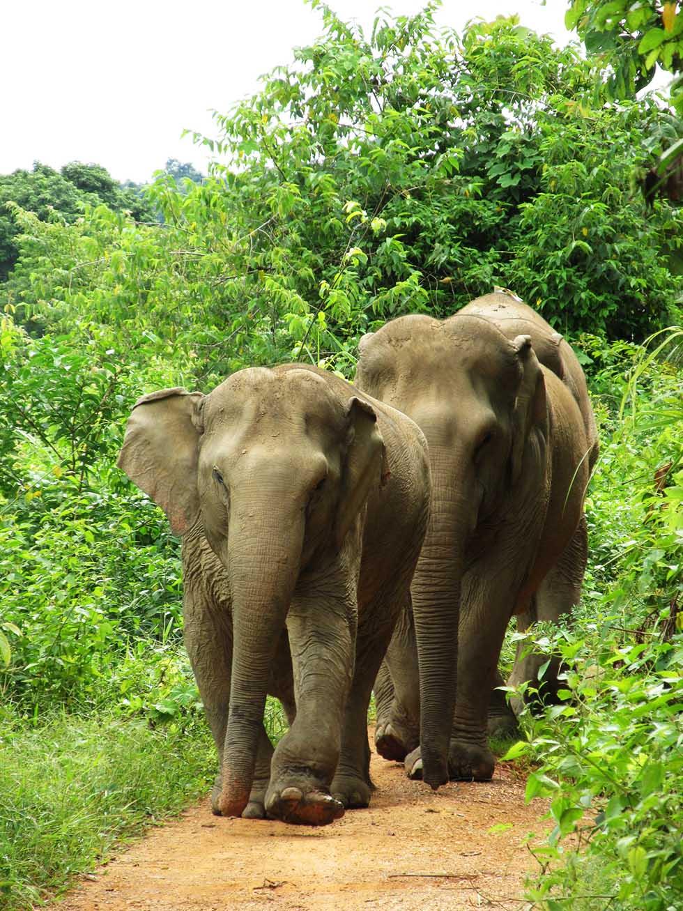 Lott's Elephant Sanctuary