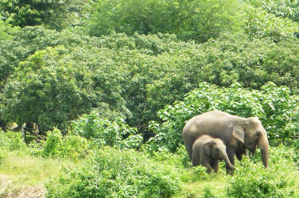 Elephant Nature Park, Navann en Sri Prae