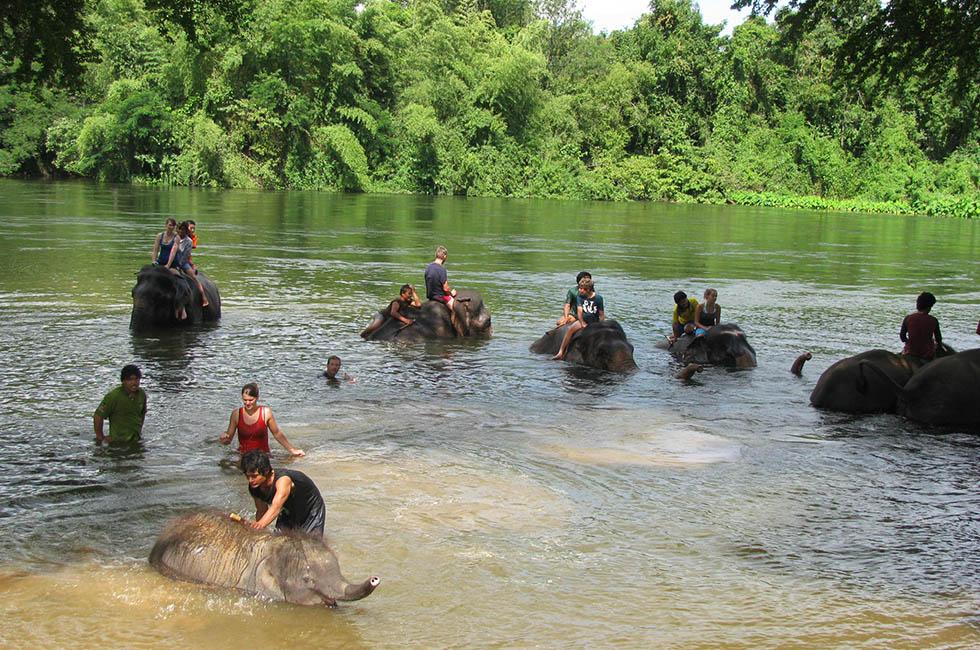 olifanten thailand elephant world