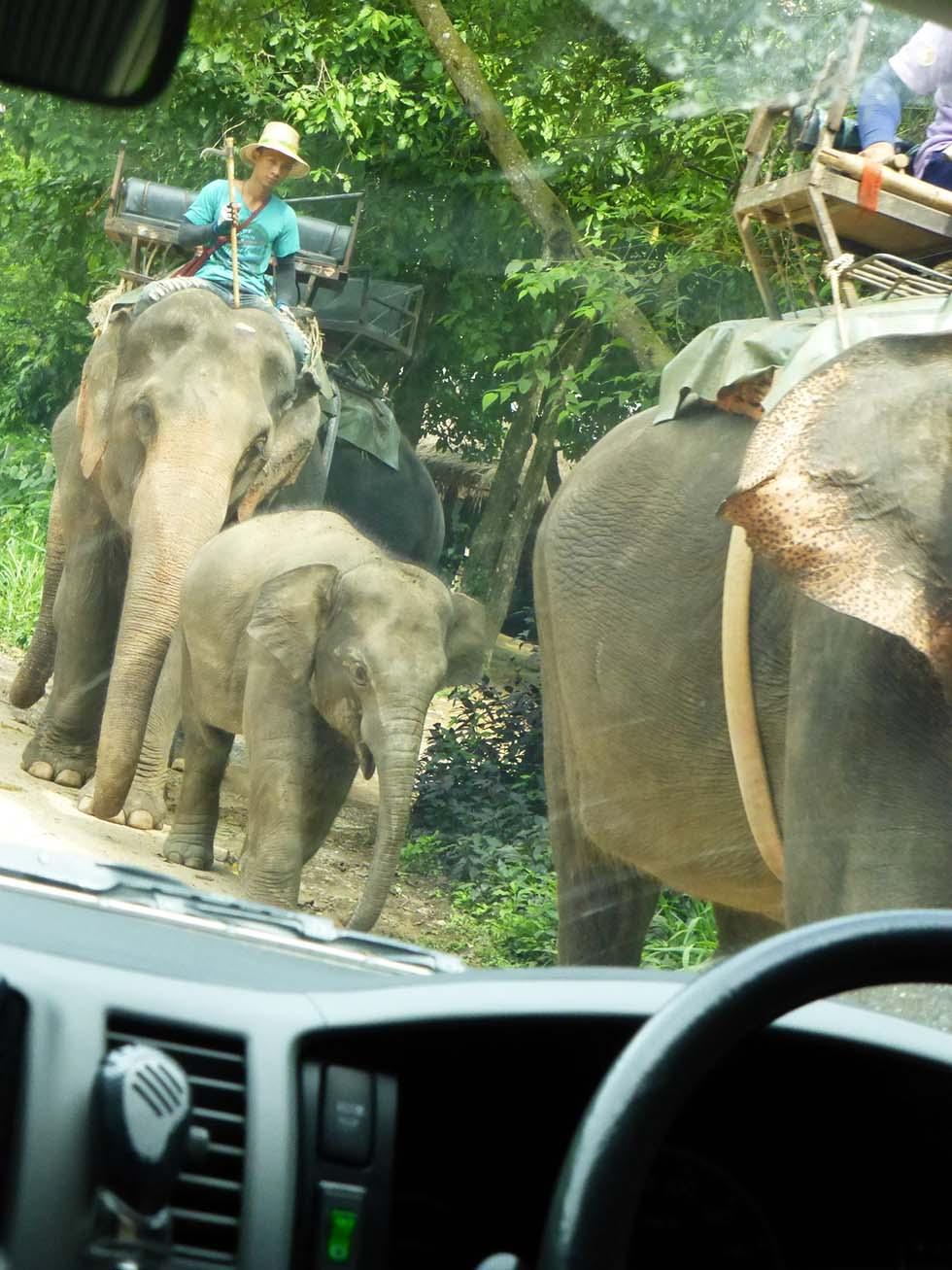 Olifanten misbruik toerisme