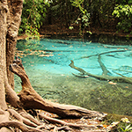 Emerald Pool & Blue Pool Krabi: zwemmen in de natuur