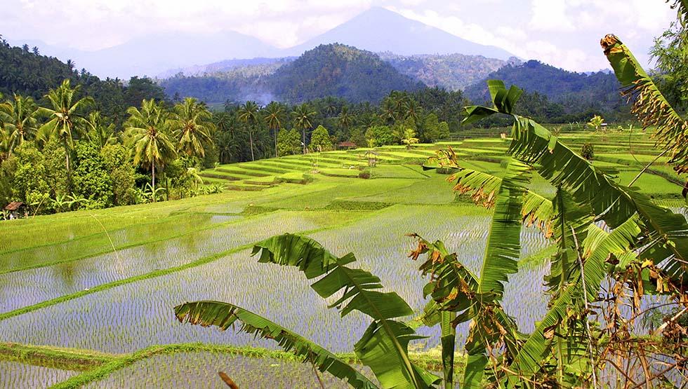 Rijstvelden Noord Thailand