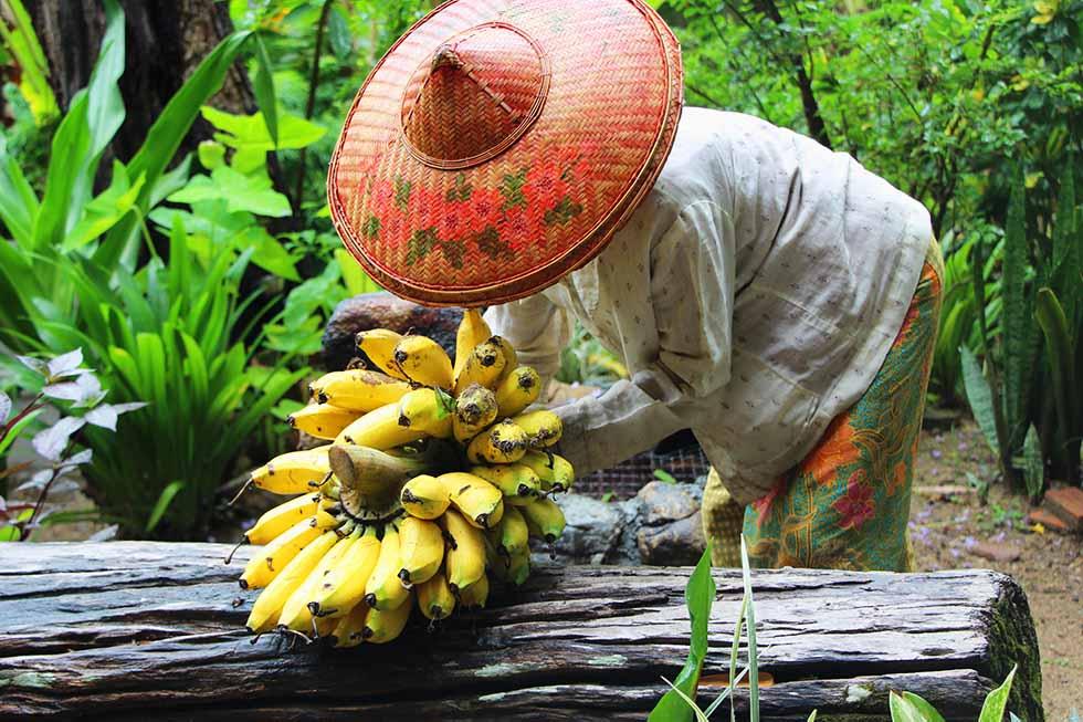 Tips Thailand Pai Banaantjes
