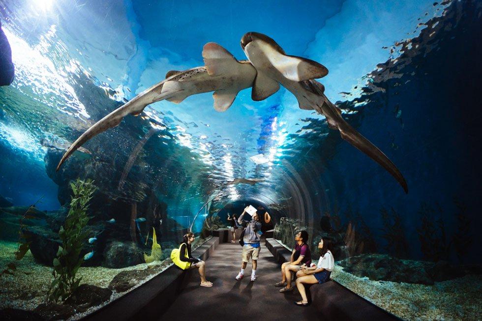 Met kinderen Sea Life Bangkok - Thailand met kinderen