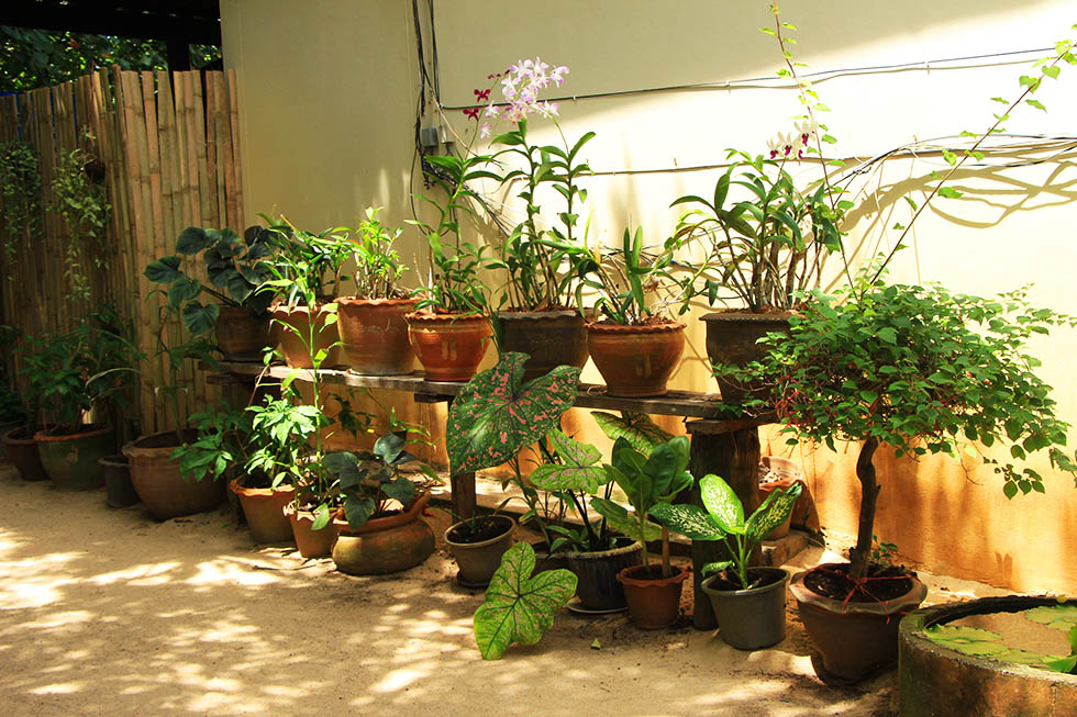 Moonhut Bungalows Koh Samui Planten