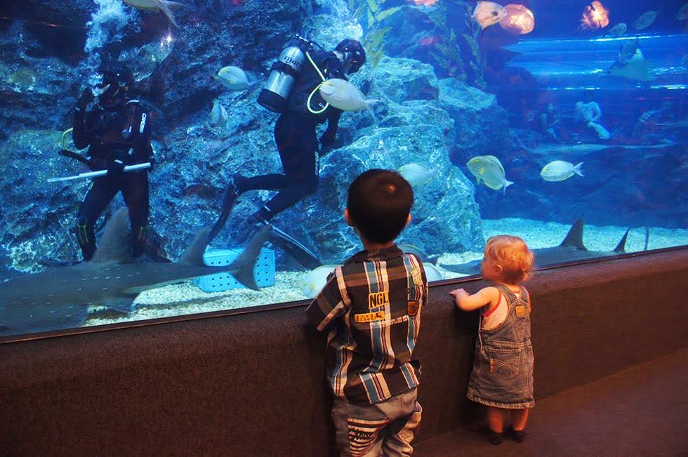 Aquarium - Thailand met kinderen