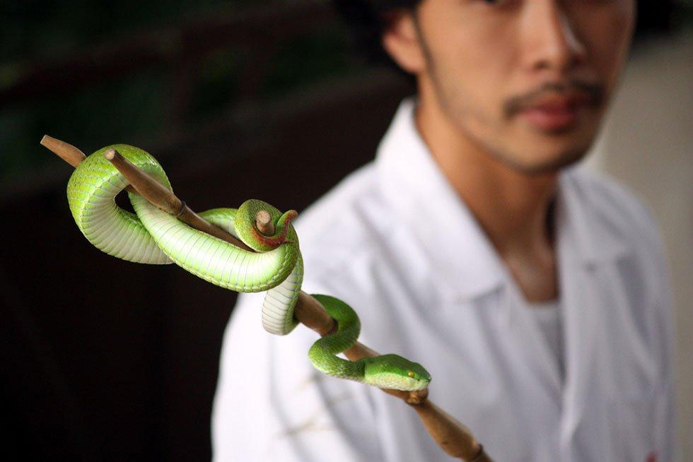 Snake Farm Bangkok - Bezienswaardigheden Bangkok