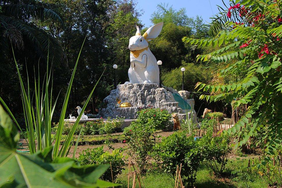 Konijn Wat Samphran