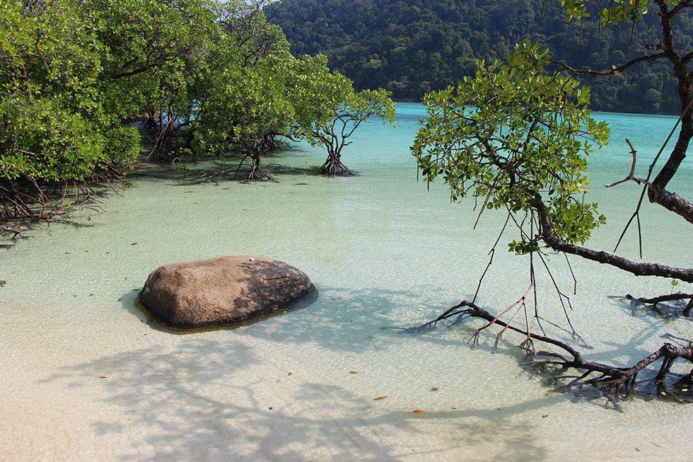 Mangrove Ao Mai Ngam