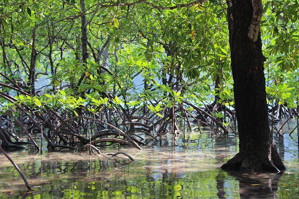 Mangrovebos Ao Mai Ngam Koh Surin