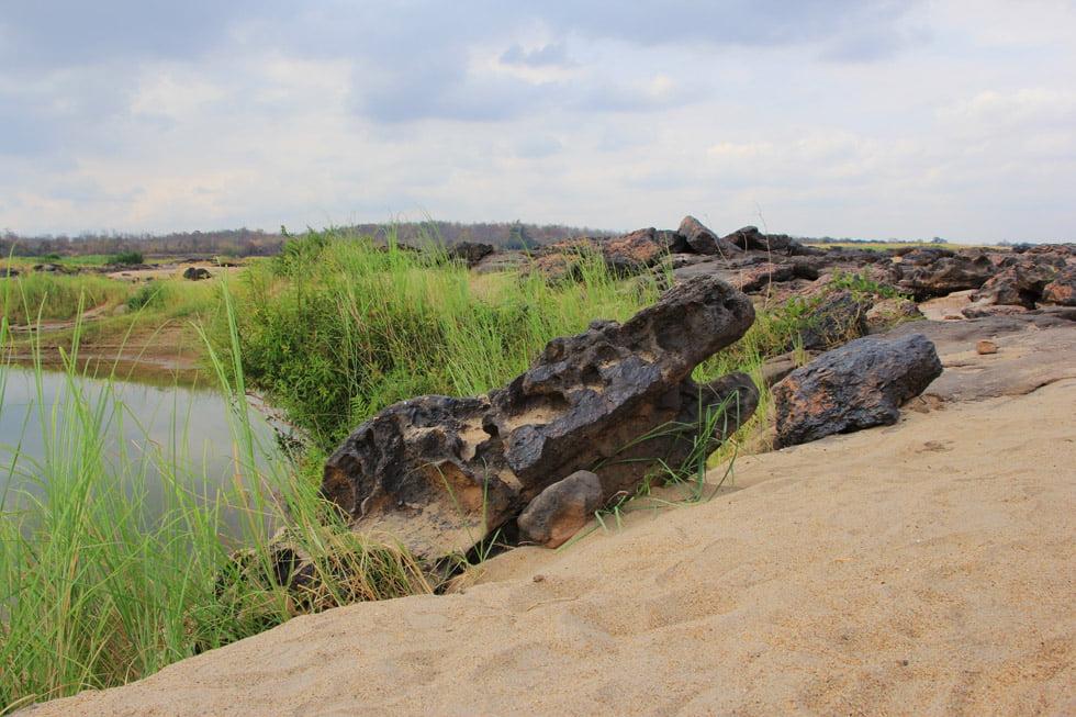 Sam Phan Bok - Koraal dat lijkt op een krokodil