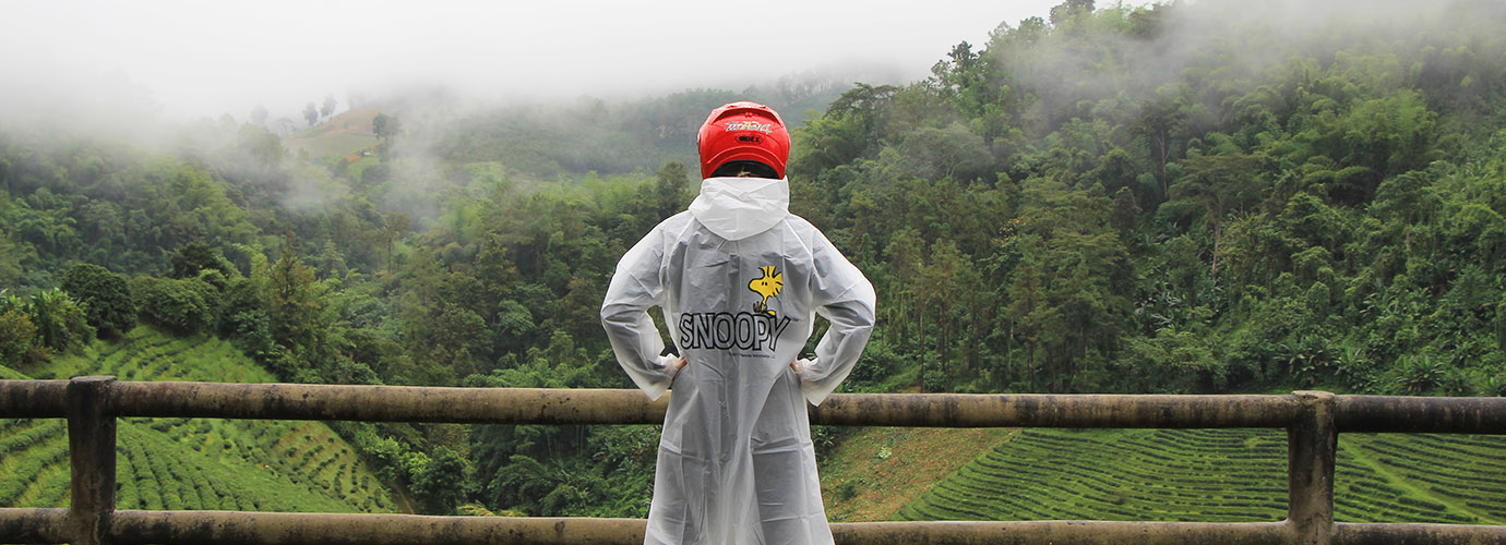 De groene Chiang Rai provincie