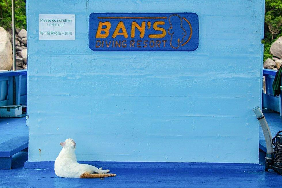 Huiskat op duikboot