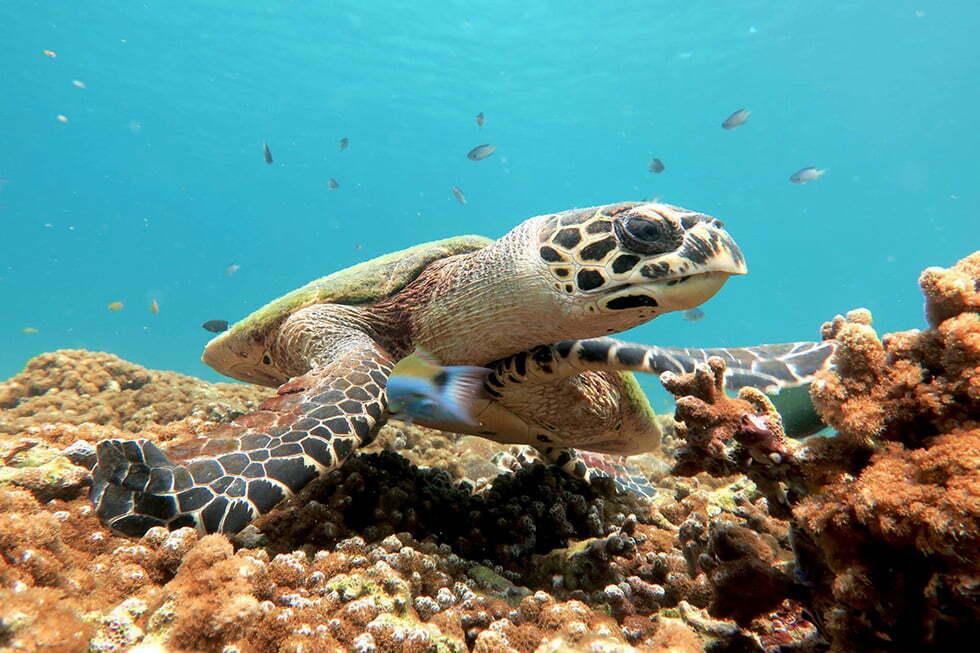 Calypso Diving op Koh Samui