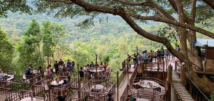 The Giant Treetop Cafe Chiang Mai