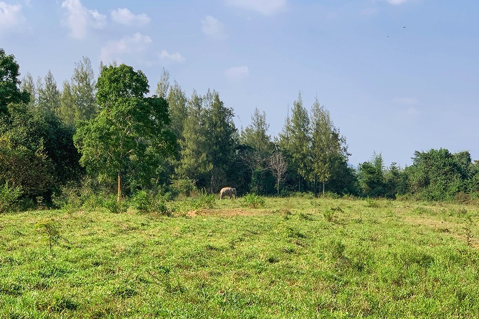 Kui Buri National Park - Olifant safari in Thailand
