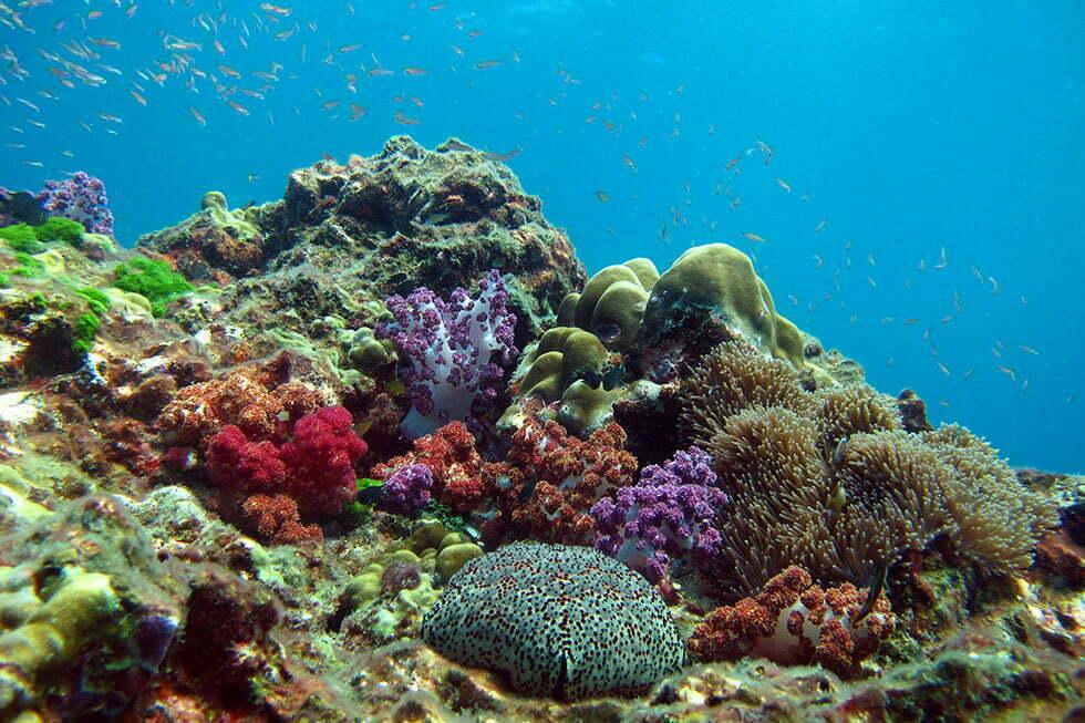 Similan Eilanden - Kleurrijk koraal