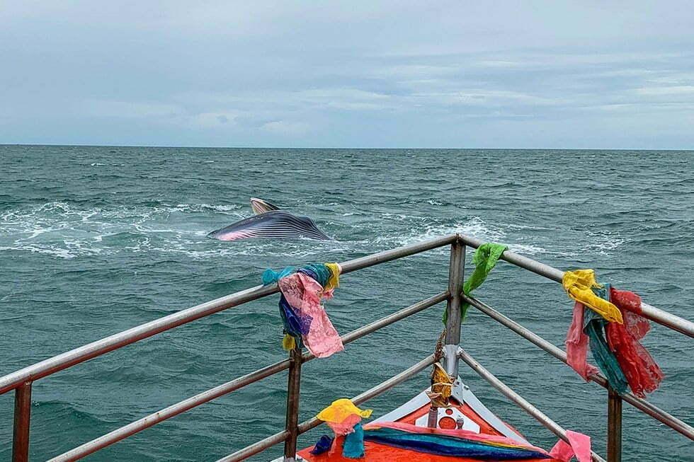 brydes walvis bangkok