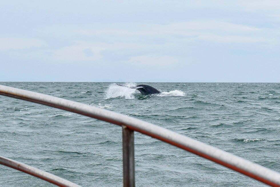 walvis spotten bangkok