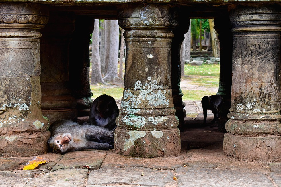 Baphuon bij Ankor Wat, Cambodja