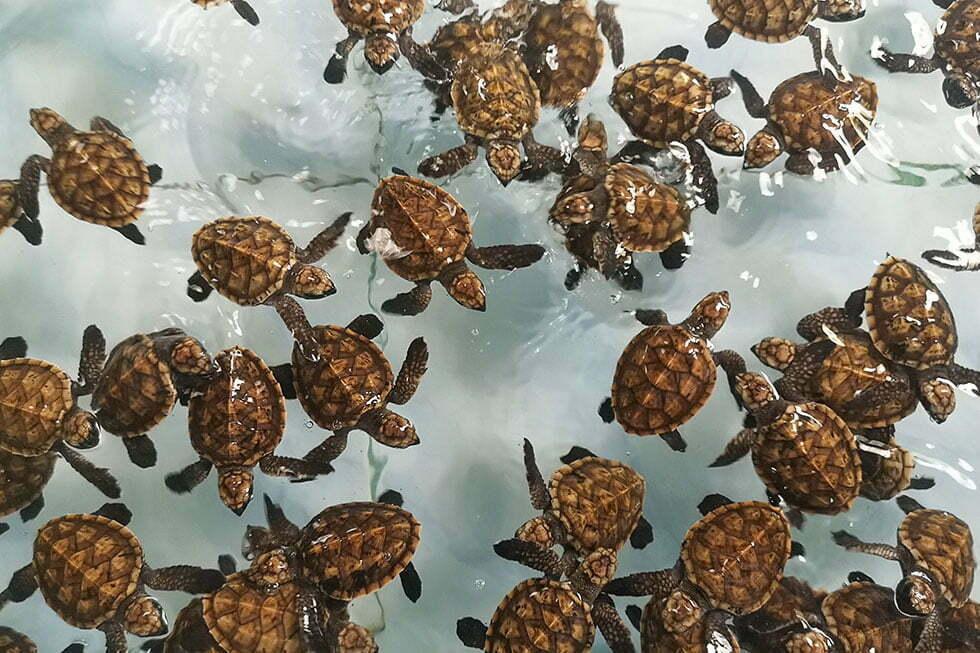 Koh Talu Island Schildpadden