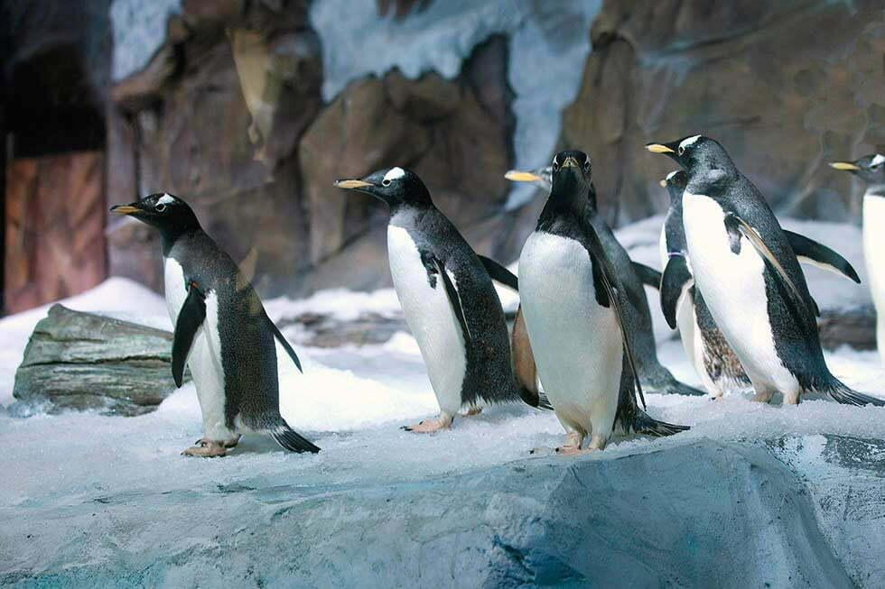 Pinguins Aquarium Bangkok